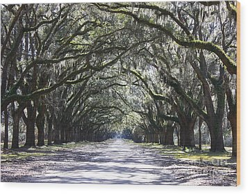 Live Oak Lane In Savannah Wood Print