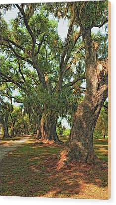 Live Oak Lane Wood Print by Steve Harrington