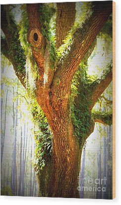 Live Oak With Cypress Beyond Wood Print by Carol Groenen