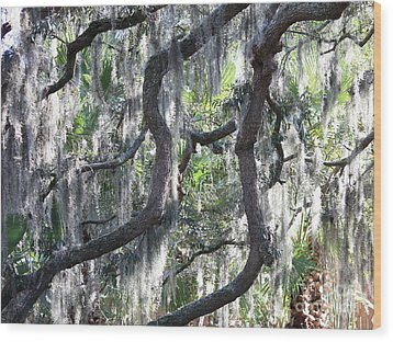 Live Oak With Spanish Moss And Palms Wood Print by Carol Groenen