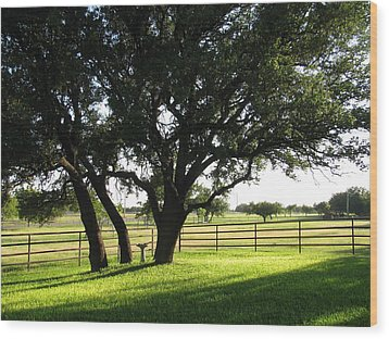 Live Oaks At Sunset Wood Print