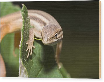 Lizard Wood Print by Andre Goncalves