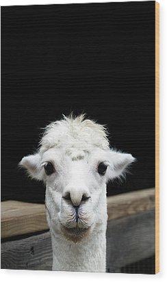 Llama Wood Print by Lauren Mancke