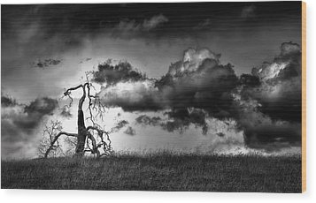 Loan Tree Wood Print