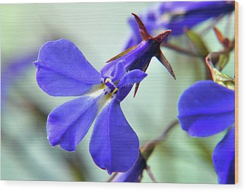 Wood Print featuring the photograph Lobelia Erinus by Terence Davis