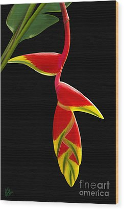 Lobster Claw Wood Print by Rand Herron