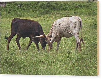 Locking Horns Wood Print by Tamyra Ayles