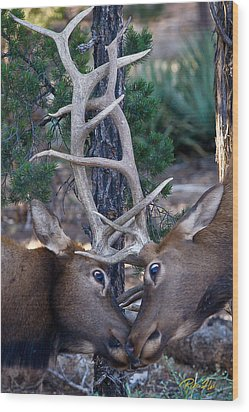 Locking Horns - Well Antlers Wood Print by Rikk Flohr