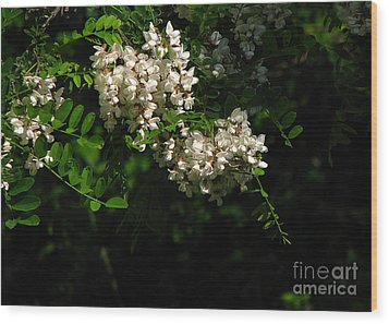 Locust Blossoms Wood Print by Deborah Johnson
