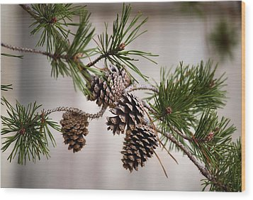 Lodgepole Pine Cones Wood Print by Karen Scovill