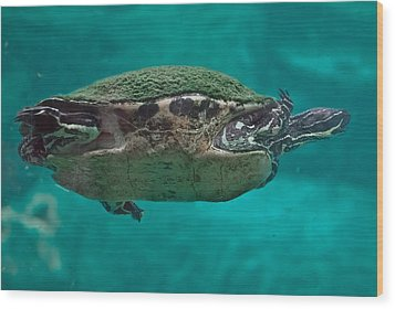 Loggerhead Plastron Wood Print by DigiArt Diaries by Vicky B Fuller