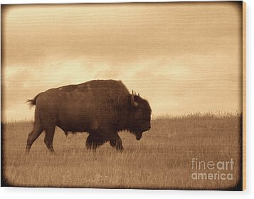 Lone Bison  Wood Print by American West Legend By Olivier Le Queinec