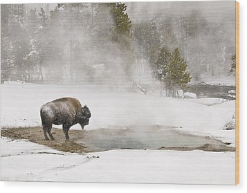 Wood Print featuring the photograph Bison Keeping Warm by Gary Lengyel