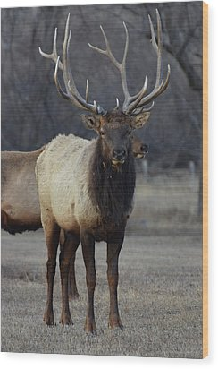 Wood Print featuring the photograph Lone Bull by Billie Colson