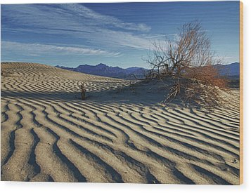 Lone Bush Death Valley Hdr Wood Print by James Hammond