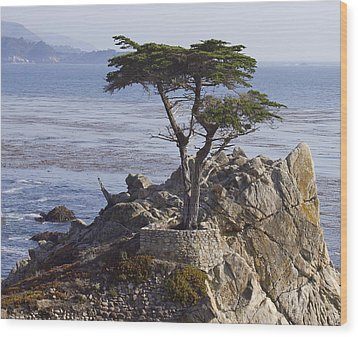 Lone Cypress Wood Print by Elvira Butler
