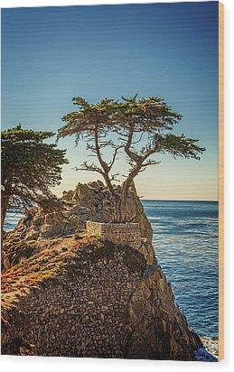 Lone Cypress Tree Wood Print by James Hammond