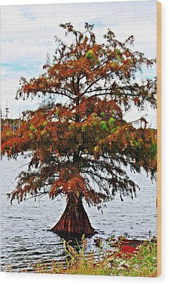 Wood Print featuring the photograph Lone Cypress Tree by KayeCee Spain