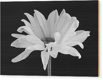 Lone Daisy Wood Print by Harry H Hicklin