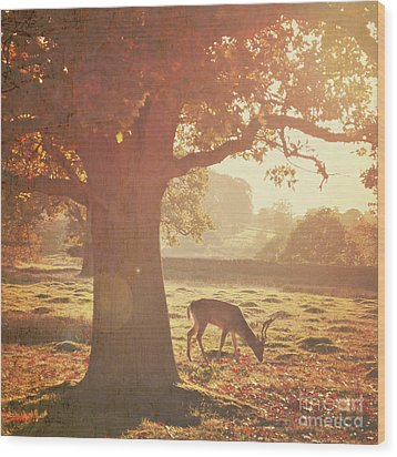 Wood Print featuring the photograph Lone Deer by Lyn Randle