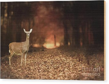 Wood Print featuring the photograph Lone Doe by Darren Fisher