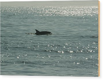 Lone Dolphin Wood Print by Allan Levin