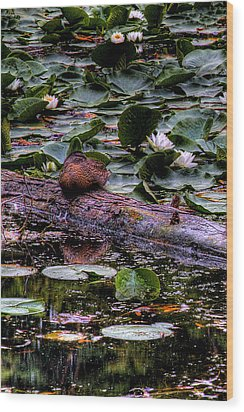 Lone Duck Wood Print by David Patterson