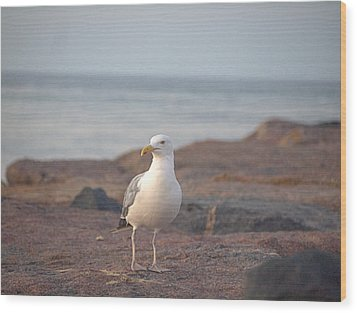 Wood Print featuring the photograph Lone Gull by  Newwwman