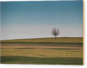 Lone Hawthorn Tree II Wood Print