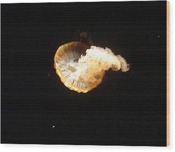 Lone Jellyfish Wood Print by Paula Ferguson