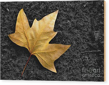 Lone Leaf Wood Print by Carlos Caetano