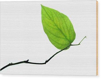 Lone Leaf Wood Print by Dan Holm