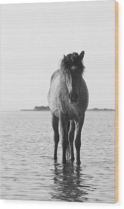 Lone Stallion Wood Print