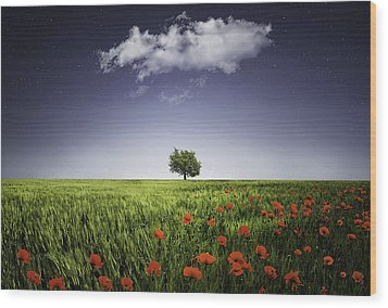 Lone Tree A Poppies Field Wood Print by Bess Hamiti