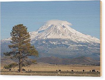 Lone Tree And Mount Shasta Wood Print by Loree Johnson