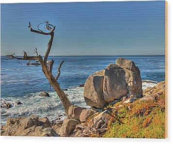 Lone Tree California Coast Wood Print by James Hammond