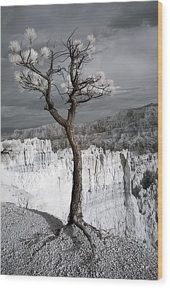 Lone Tree Canyon Wood Print by Mike Irwin