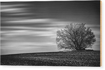 Wood Print featuring the photograph Lone Tree by Dan Jurak