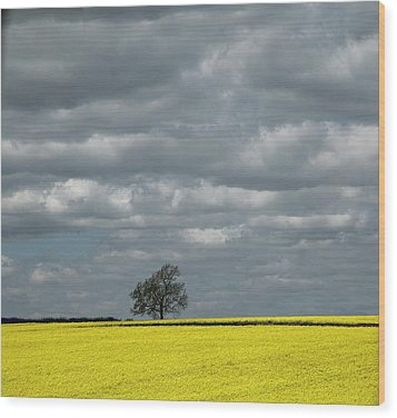 Wood Print featuring the photograph Lone Tree by Elvira Butler