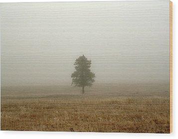 Lone Tree In Fog Wood Print