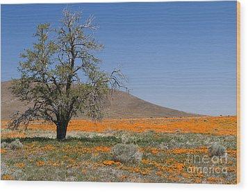 Lone Tree In The Poppies Wood Print by Sandra Bronstein