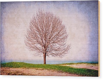 Lone Tree Wood Print by Milena Ilieva