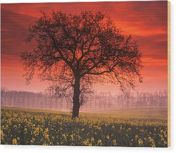 Lone Tree Sunrise Wood Print by John Perriment
