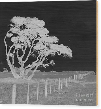 Lone Tree, West Coast Wood Print by Nareeta Martin