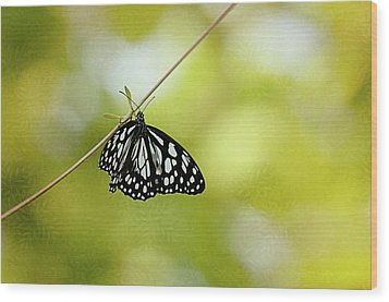 Lonely Butterfly  Wood Print by Maria Angelica Maira