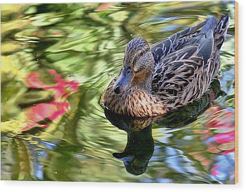 Wood Print featuring the photograph Lonely Duckie by Elaine Malott