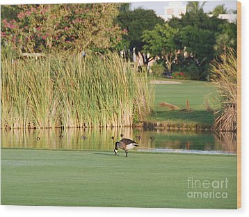 Lonely Goose On The Golf Course Wood Print by Jan Daniels