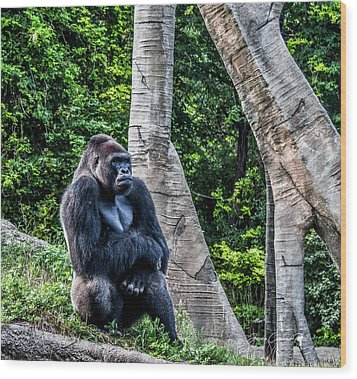 Wood Print featuring the photograph Lonely Gorilla by Joann Copeland-Paul