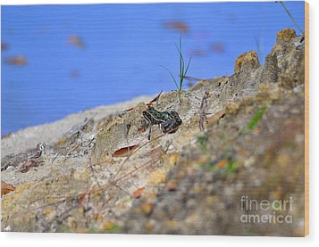 Wood Print featuring the photograph Lonely Leopard by Al Powell Photography USA