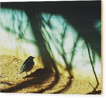 Wood Print featuring the photograph Lonely Little Bird by Shawna Rowe